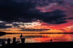 Birds of Sunset Stock Photos