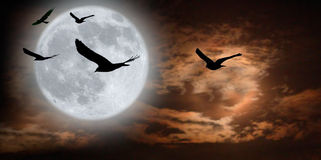 Birds and surreal moonscape Royalty Free Stock Image