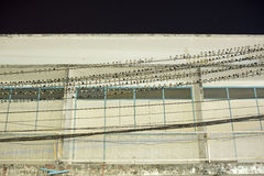 Birds, swallows, resting on electrical wires. In front of commercial building at night Stock Image
