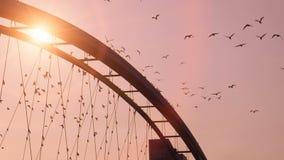 Birds swarm slow motion beautiful romantic background sunset bridge red sky. Video of birds swarm slow motion beautiful romantic background sunset bridge red sky stock footage