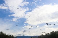 Birds Swarming in cloudy blue sky with fluffy clouds and blue montains in the background. A flock of birds Swarming in cloudy blue sky with fluffy clouds and Stock Photography
