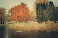Birds swim in the river in autumn park Stock Photos