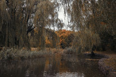 Birds swim in the river in autumn park Stock Photo