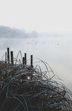 Birds swimming in cold lake in misty fog weather Royalty Free Stock Photography