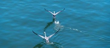 Birds taking off royalty free stock photo