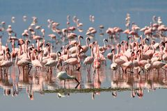 Birds of Tanzania Royalty Free Stock Photos