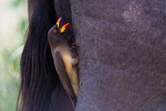 Birds of tanzania. Birds from different parts of tanzania, east africa Stock Photo