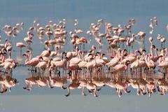 Birds of tanzania Royalty Free Stock Image