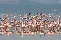 Birds of tanzania Royalty Free Stock Photography