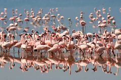 Birds of tanzania. Birds from different parts of tanzania, east africa Royalty Free Stock Photos