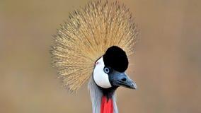 Birds of tanzania Stock Images