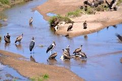 Birds of tanzania Stock Photos