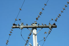 Birds on a telephone pole Stock Photo
