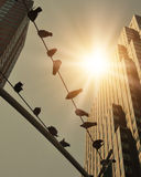 Birds on Telephone Wire in City with Sunshine Royalty Free Stock Photography
