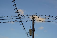 Birds on Telephone Wires. In West Houston, Texas Stock Photos
