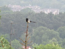 Birds and their environment Royalty Free Stock Photos