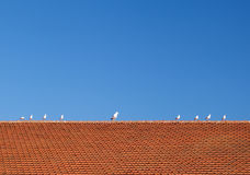Birds on the tiled roof Royalty Free Stock Images
