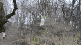 Birds (Titmouse) eating from feeding-rack autumn stock footage