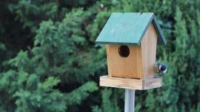 Birds Titmouse feeding stock video footage