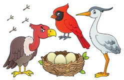 Free Birds Topic Collection 1 Royalty Free Stock Photography - 123445417