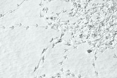 Birds tracks. A lots of birds tracks in snow Stock Photo