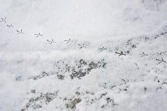 Birds tracks snow footprint way trail Royalty Free Stock Images