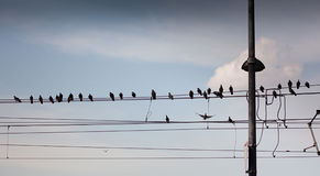 Birds on the Tram Wires. Dozens of Birds Sit on the Tram Wires Stock Photo