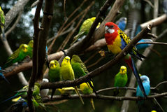 Birds in a Tree Stock Images