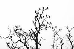 Birds on the tree royalty free stock photo
