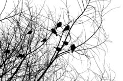 Birds on a tree. Over white Stock Image