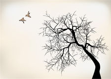Birds and tree. 2 birds on tree falling in love Royalty Free Stock Photo