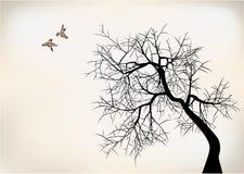 Birds and tree. 2 birds on tree falling in love vector illustration