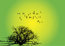 Birds with tree Royalty Free Stock Photo