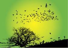 Birds with tree stock image