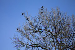 Birds on a tree Stock Photography