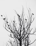 Birds in tree Royalty Free Stock Images