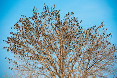 Birds on tree. Blue sky background. Stock Image