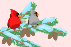 Birds on a tree branch. The bird sits on the branches of Christmas trees vector illustration Stock Photo