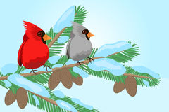 Birds on a tree branch. The bird sits on the branches of Christmas trees vector illustration Stock Image