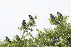 Birds on a tree branch in the spring Royalty Free Stock Image