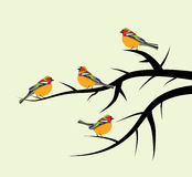 Birds on tree branches, vector. Colorful birds on tree branches, vector Royalty Free Illustration