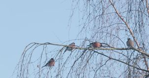 Birds on tree branches in spring.  stock video