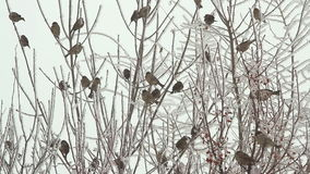 Birds on a tree over sky at winter day stock video