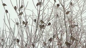 Birds on a tree over sky at winter day. Birds on a tree over blue sky at winter day stock video