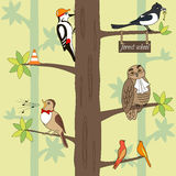 Birds on the tree. Seamless pattern cartoon birds on a tree. Owl, woodpecker, magpie, nightingale. Vector illustration, can be used for creating card or for royalty free illustration