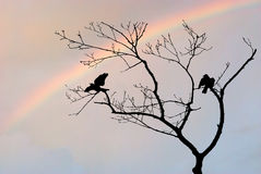 Birds in Tree  Silhouette with Rainbow Royalty Free Stock Photography