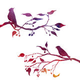 Birds at tree silhouettes Stock Photography