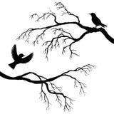Birds at tree silhouettes Stock Photo