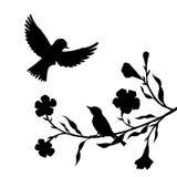 Birds at tree silhouettes Stock Photos