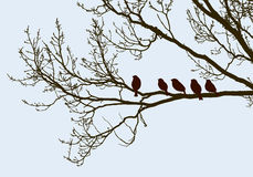Birds on the tree in the spring Royalty Free Stock Photos